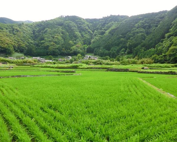 http://www.shizutan.jp/learning/2013/06/03/images/01sakanokami.JPG