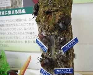 shizenshi008.JPG