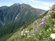 赤石岳040804千枚岳から.png