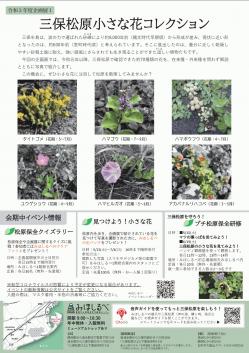 みほしるべ企画展「三保松原小さな花コレクション」裏.png