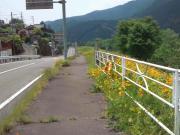 105-240529tamahatabashi02.jpg
