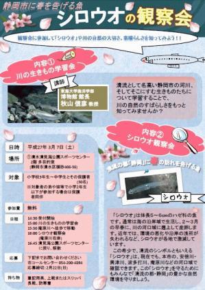 シロウオ観察会 チラシ画像.jpg