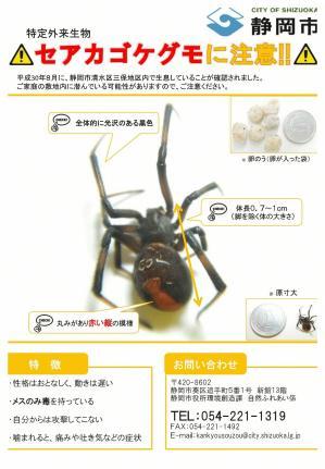 チラシ「セアカゴケグモに注意!」-1.jpg