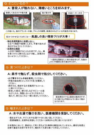 チラシ「セアカゴケグモに注意!」-2.jpg